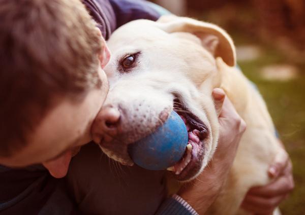 Chemioterapia onkologiczna psów i kotów