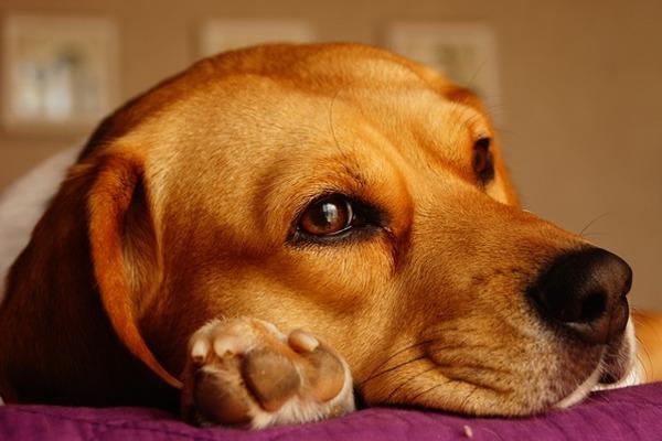 Objawy nowotworów u zwierząt