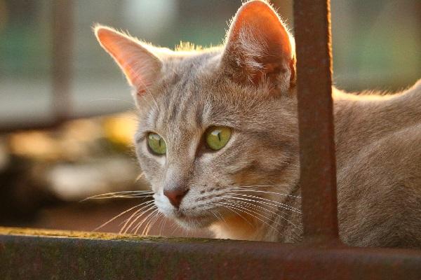 Guzy gruczołu sutkowego u psów i kotów